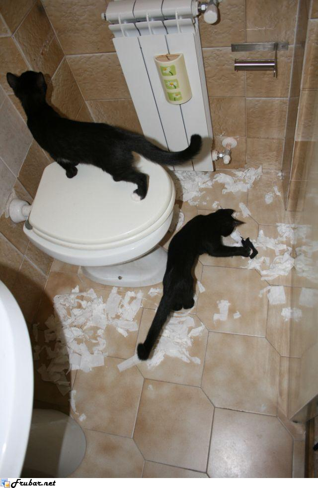 Pets Destroying Things world's funniest hilarious pictures & videos.