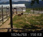 LJUBUŠKI-MK BIGRESTE 3358A1E9-7424-EE4A-AD95-0BCA231BD6FA_thumb