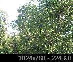 836C6ACD-6266-F34B-9527-DF9527C1540F_thumb.jpg